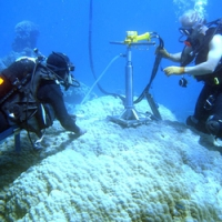 High temperatures, not ocean acidification is threatening the growth of coral