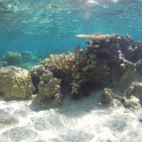 Study finds ocean acidification threatens coral reef systems