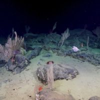 Deep-sea coral gardens discovered in canyons off Australia's South West